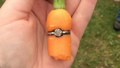 Photo of With this carrot, I thee wed: A backyard homesteading proposal
