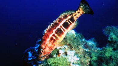 Photo of Aumentou tamanho mínimo de captura de 4 espécies