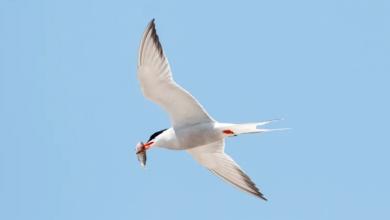 Photo of N.S. bird watchers shocked by 'staggering' bird declines