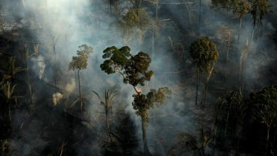 Photo of EUA e Brasil anunciam fundo de 100 milhões para a biodiversidade na Amazónia