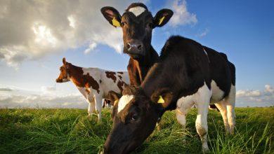 Photo of Espanhóis compram manteiga, leite e queijo aos Açores