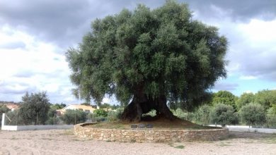 Photo of Terra Viva – Árvore