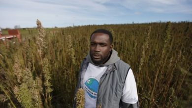 Photo of Legal hemp farmer accuses TD Canada Trust of freezing his account based on his appearance