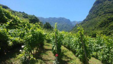 Photo of Foto de vinha no norte da Madeira candidata a melhor do mundo