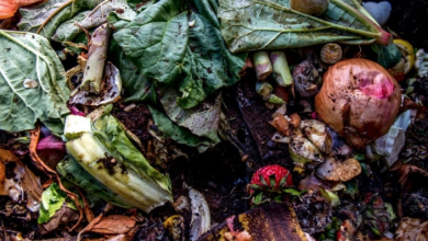 Photo of The problem with Ontario's plan to ban food waste from landfills