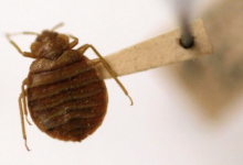 Photo of Signs of bed bugs spotted at 2 more federal buildings
