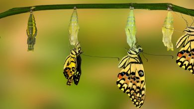 Photo of O casulo e a borboleta
