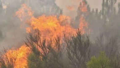 Photo of PJ deteve homem que ateou fogo em Câmara de Lobos