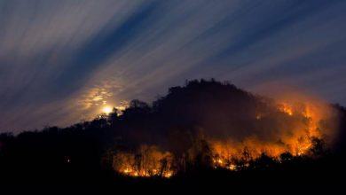 Photo of Porto Bay cede terrenos à Madeira para faixa corta-fogo