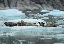 Photo of Terra Viva – Lontras do Alasca com Vírus do Atlântico