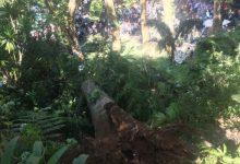 Photo of Mais duas testemunhas da queda de árvore no Funchal ouvidas à porta fechada