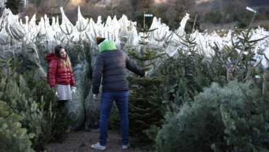 Photo of Pricey Christmas trees traced back to 2008 financial crisis