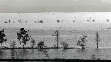 Photo of Diques do Mondego deverão ser reparados em dois meses