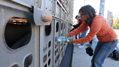 Photo of Animal rights activists decry Ontario bill that would limit farm protests