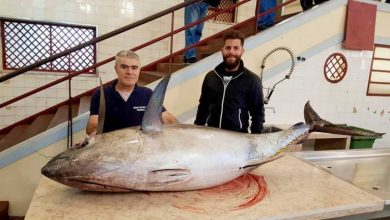 Photo of Atum patudo de 121 quilos pescado nos mares da Madeira