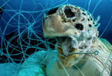 Photo of Sask. photographer hopes award-winning image of trapped sea turtle inspires change
