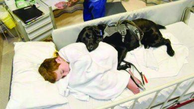 Photo of Labrador de menino autista não sai de perto dele nem no hospital