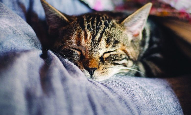 Photo of Terra Viva – Gatos, os bons ou os maus da fita?