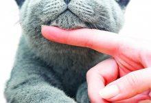 Photo of Para animais muito bem estimados!