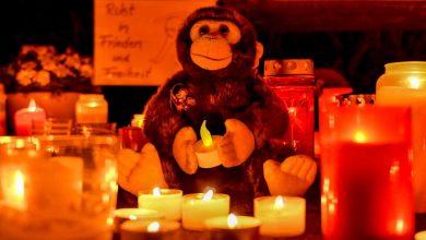 Photo of Mãe e filhas assumem responsabilidade por fogo que matou 30 macacos