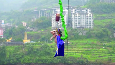 Photo of Bungee jumping com porcos