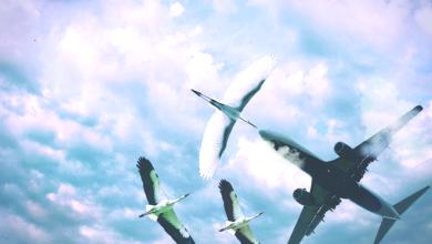 Photo of Terra Viva – Voar