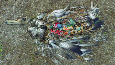 Photo of Ottawa deve declarar plásticos como substância tóxica