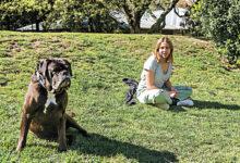 Photo of Patas dos cães devem ser lavadas quando animal regressa a casa