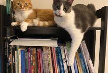 Photo of A quarentena e vivendo como gatos