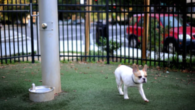 Photo of The dog park is open again. Should you use it?