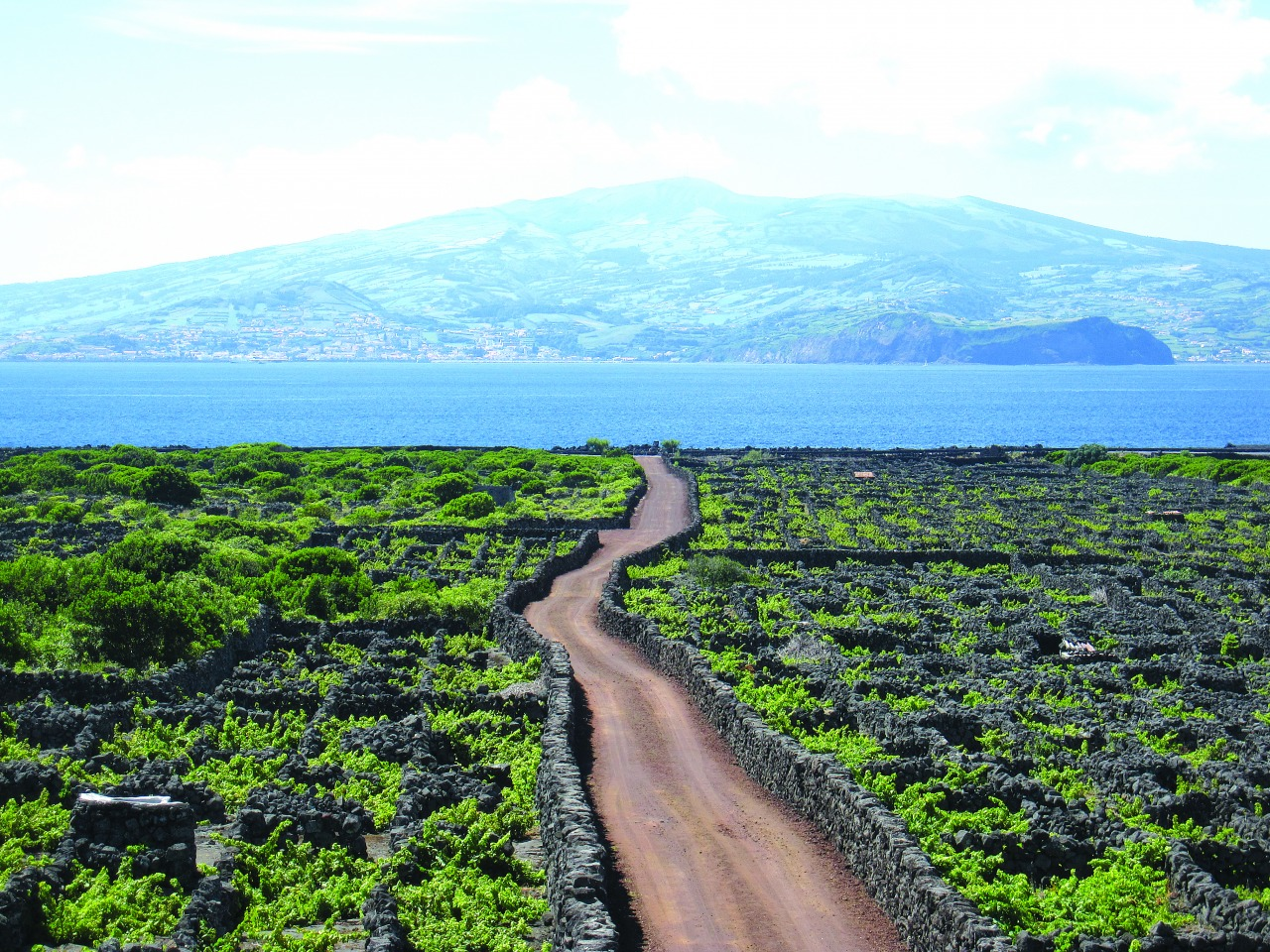 Vinhas - Ilha Faial em frente