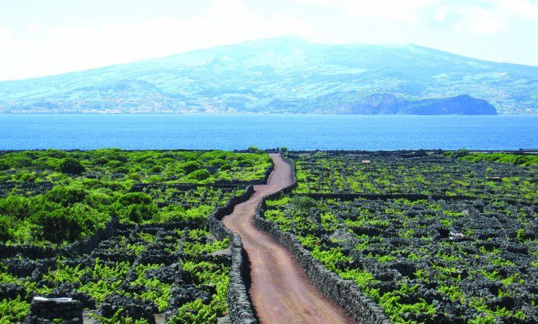 Photo of A ilha das pedras negras