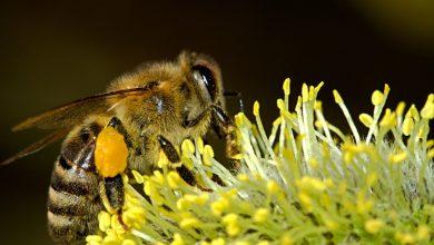 Photo of A importância  das abelhas