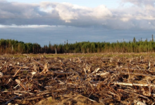 Photo of U.S. toilet paper production is wiping out Canada's boreal forest, report claims