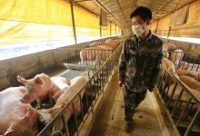 Photo of Novo vírus da gripe encontrado na China tem potencial para causar nova pandemia
