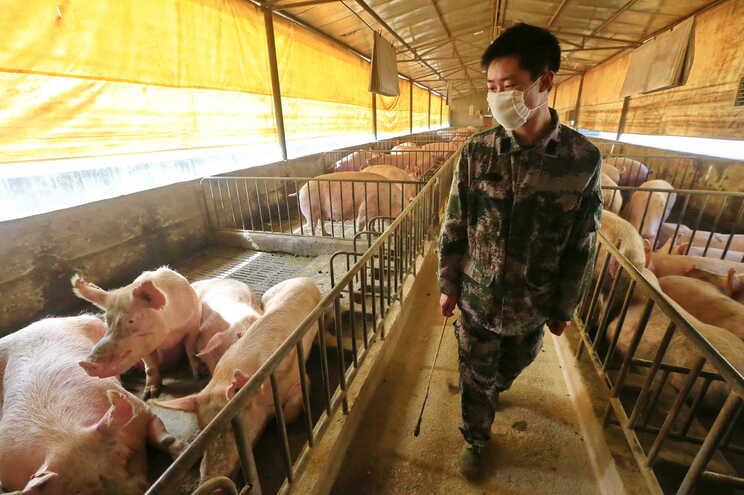 Novo vírus da gripe encontrado na China tem potencial para causar nova pandemia