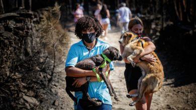 """Photo of Dezenas de pessoas """"invadem"""" e resgatam cães de canil ilegal em Santo Tirso"""