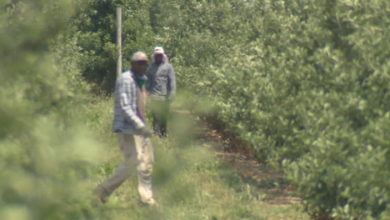 Photo of Ottawa 'remotely' inspected Ontario farms while COVID-19 infected hundreds of migrant workers