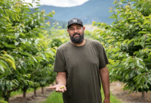 Photo of Not so sweet season for B.C. farmers, cherry pickers due to weather and COVID-19