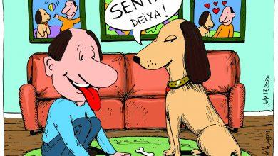 Photo of É uma vida de cão – Os Animais de Estimação e Você