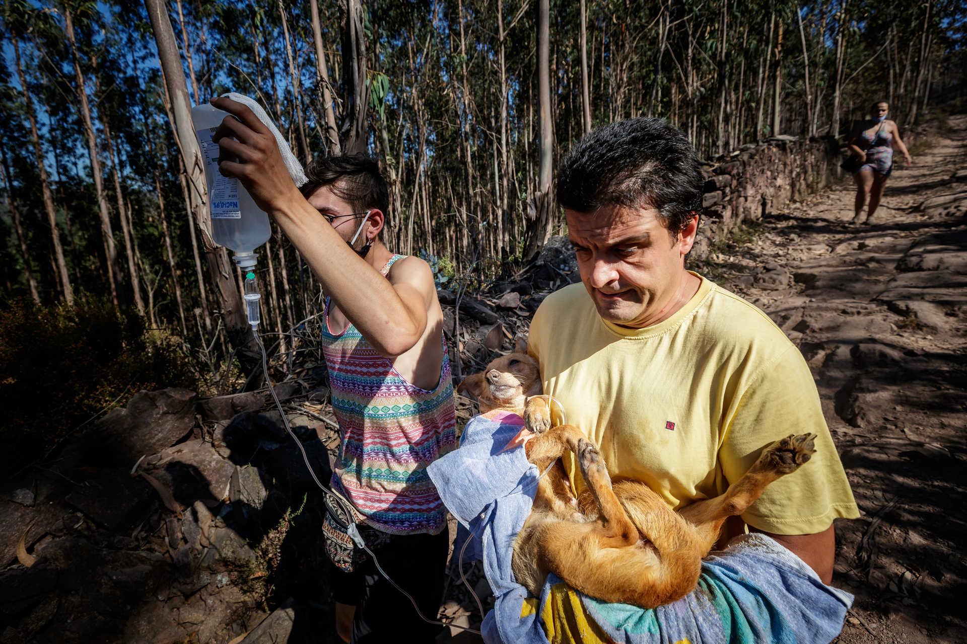 Dezenas de pessoas invadem-portugal-mileniostadium