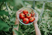Photo of Estes alimentos fazem bem ao cérebro
