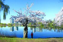 Photo of A natureza no meio da cidade