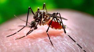 Toronto confirms 1st human case of West Nile virus in 2020-Milenio Stadium-GTA