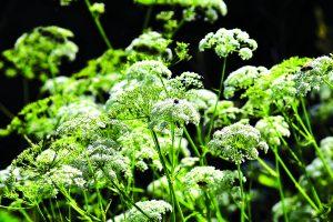 Natureza Venenosa-ambiente-mileniostadium