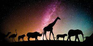 Dolorosamente rara e bela-mundo-mileniostadium