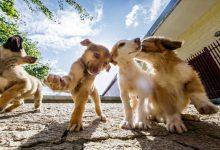 Dinamarca recebe cães rejeitados em Portugal-dinamarca-mileniostadium