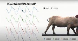 Elon Musk's Neuralink puts computer chips-pig-mundo-mileniostadiuma
