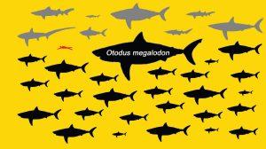 Maior Tubarão Já Existente-US-mileniostadium