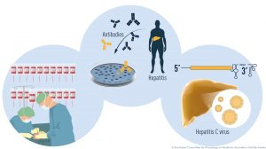Nobel da Medicina 2020-mundo-mileniostadium